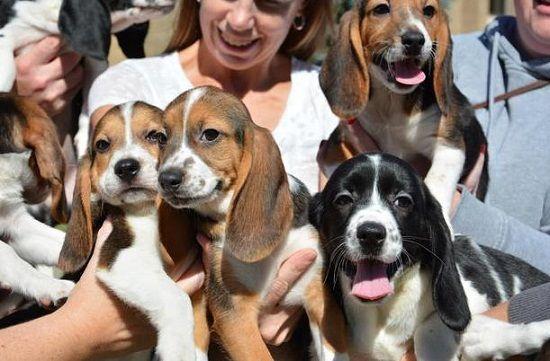 这一技术有望帮助拯救濒临灭绝的犬科动物